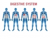 digestive health micronutrients